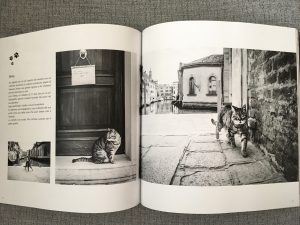 - Cats in Venice 2