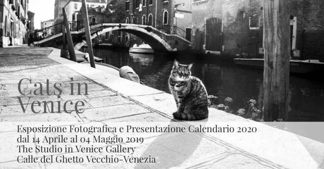 eventi - Esposizione e presentazione Calendario Cats in Venice 2020