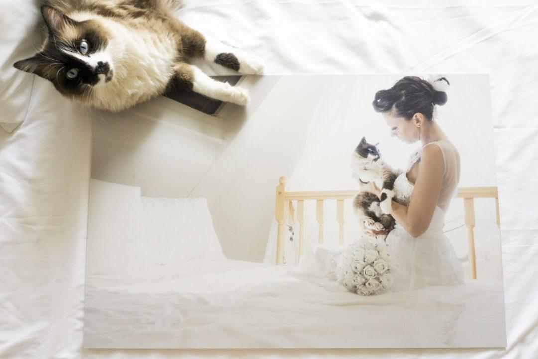 post matrimonio con il tuo gatto