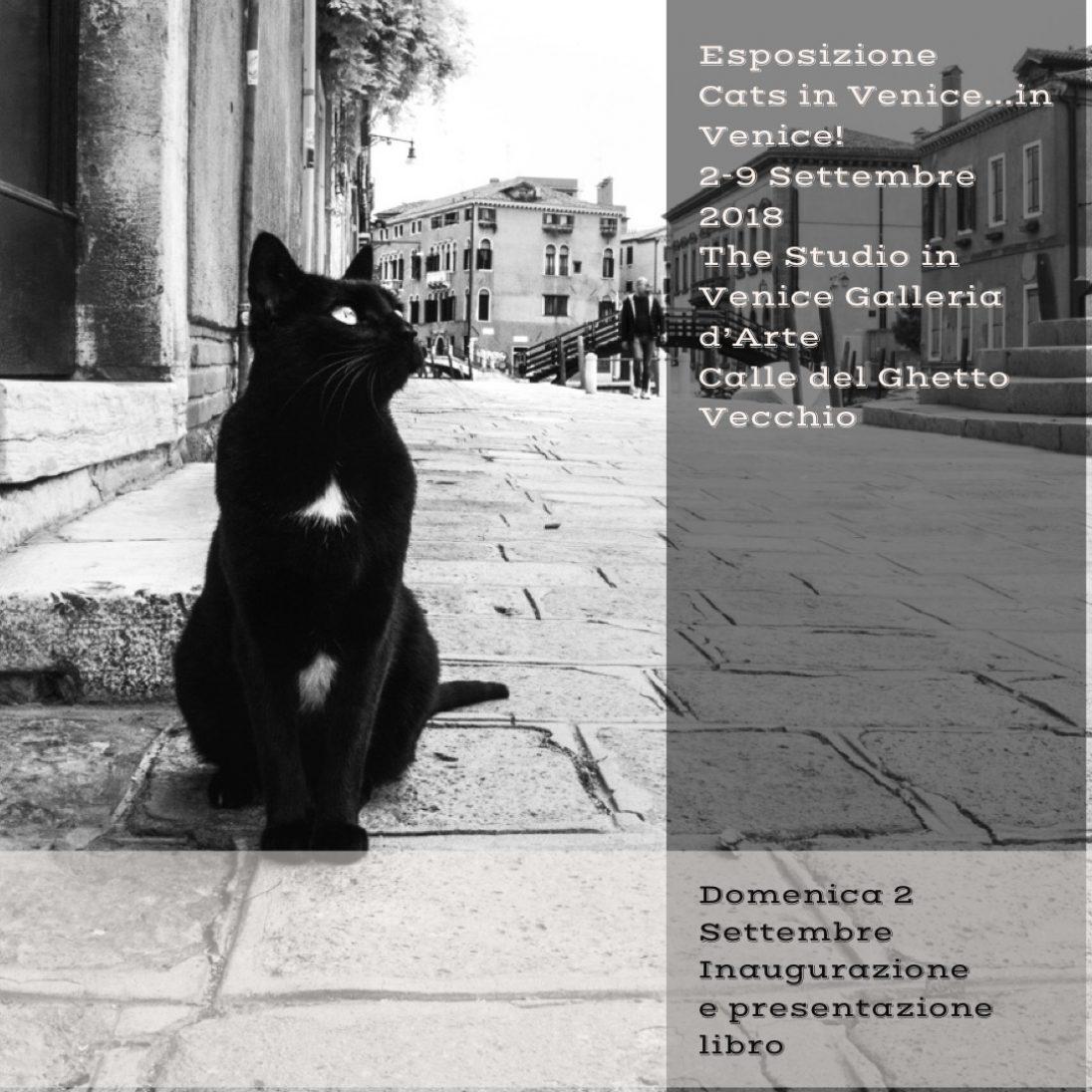 eventi - Esposizione fotografica Cats in Venice...in Venice